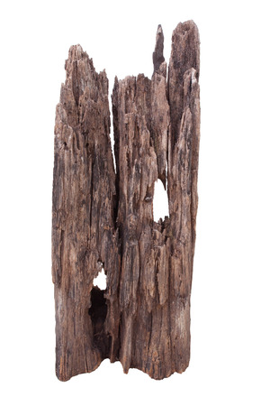 dead wood: natural dry dead wood isolated white use for multipurpose