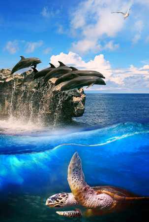 vida natural: tortuga en profundidad junping delfín mar y mar gaviota volando por encima de su uso para la vida marina natural y el océano de fondo la vida silvestre Foto de archivo