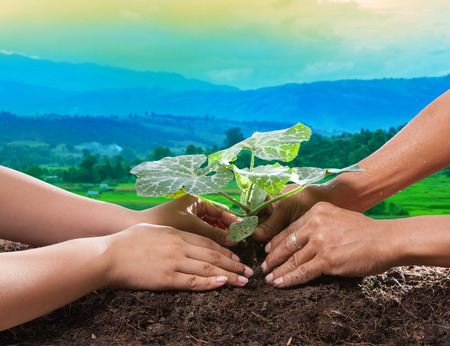 seeding: human hand planting young plant together on dirt soil against beautiful sun light in plantation field Stock Photo