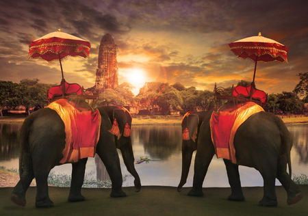 india culture: elephant dressing with thai kingdom tradition accessories standing in front of old pagoda in Ayuthaya world heritage site use for tourism and multipurpose background , backdrop Stock Photo