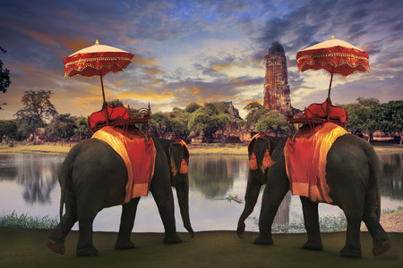 elephant dressing with thai kingdom tradition accessories standing in front of old pagoda in Ayuthaya world heritage site use for tourism and multipurpose background , backdrop Stock Photo