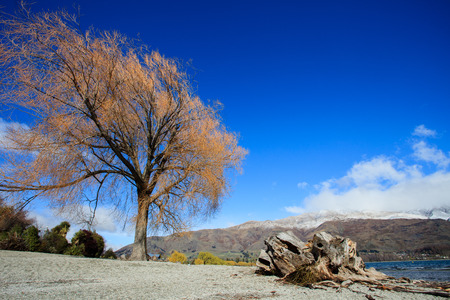 the south island: beautiful landscape of lake wanaka in south island new zealand important traveling destination of tourist to visiting