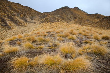 land scape: beautiful land scape of grass tufts  mountain in waitaki district south island new zealand