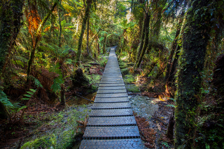 walking path: walking path in mountain rain forest at matheson lake important traveling destination in south island new zealand Stock Photo