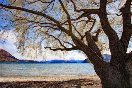 land scape: beautiful land scape of lake wanaka south island new zealand