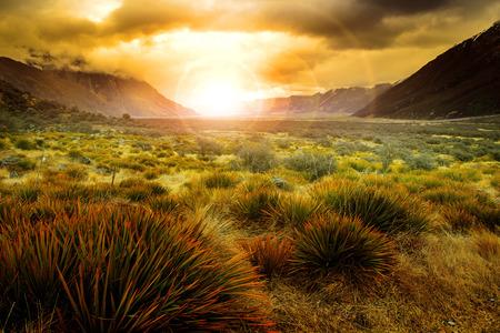 美しい自然の背景としてニュージーランド風景使用の開かれた国の草フィールドの背後に昇る