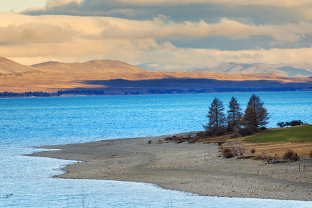 land scape: beautiful pine and mountain  land scape of pukaki lake along the way to aoraki - mt.cook national park south island new zealand
