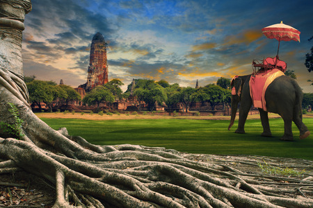 big root of banyan tree and kingdom elephant dressing against land scape of ancient and old  pagoda in history temple of Ayuthaya world heritage sites of unesco central of thailand important destination of tourist Stock Photo