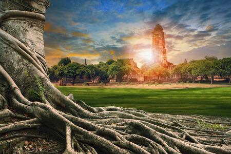 バンヤン ツリーの歴史タイ観光の重要な地でアユタヤの寺院で古代の古い塔の景観の大きなルート