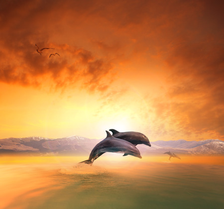 mid air: couples of sea dophin jumping through ocean wave floating mid air against beautiful sun set sky