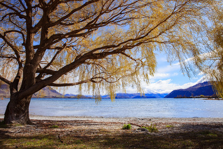 out door: beautiful scenic of lake  wanaka in south island new zealand important landmark and traveling destination