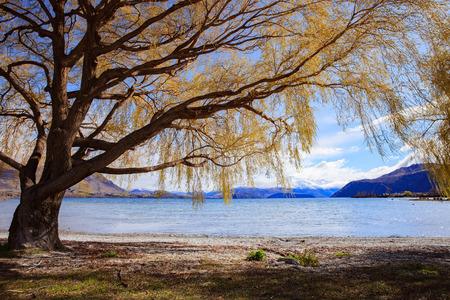 destination scenic: beautiful scenic of lake  wanaka in south island new zealand important landmark and traveling destination