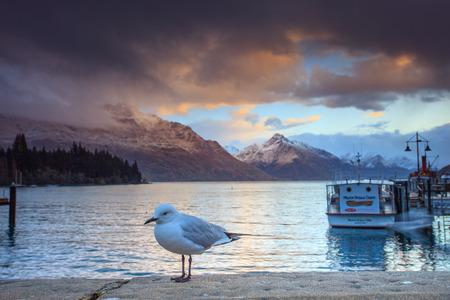 sea gull: sea gull and queentown pier