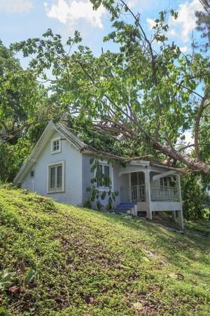 Caduta albero dopo tempesta dura sulla casa danneggiata Archivio Fotografico - 50101727