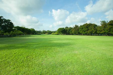 美しい朝の光緑の芝生のフィールドとコピーのためのスペースに緑の新鮮な木植物視点で公共の公園で多目的