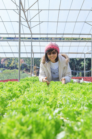 hydroponic: healthy care woman in hydroponic vegetable green house plantation