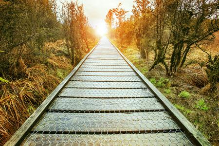 rising of sun: el aumento final sol de la perspectiva Camino de madera en pie natural y salvaje