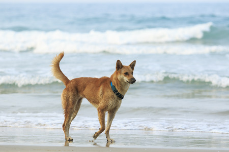 out of doors: face of street dog standing on sand beach