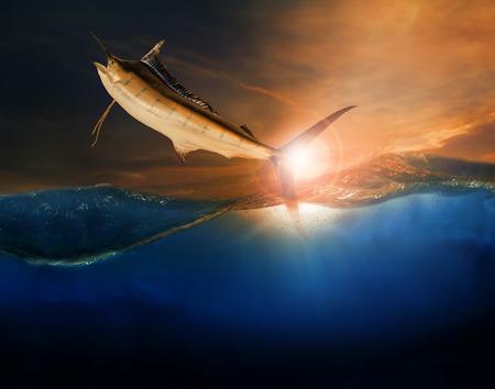 pez vela: volador pez vela sobre azul utilizaci�n del mar del oc�ano de la vida marina y la hermosa naturaleza acu�tica
