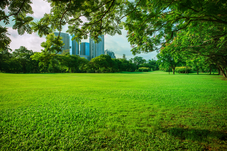 beautiful morning sun shining light in public park with green grass field and green fresh tree plant perspective use as copy space and natural background,backdrop Imagens