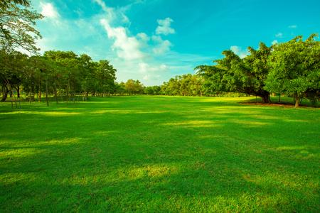 美しい緑の芝生のフィールドと新鮮な植物自然夏シーズン背景の青空利用白い雲に対して鮮やかな草原の背景 写真素材