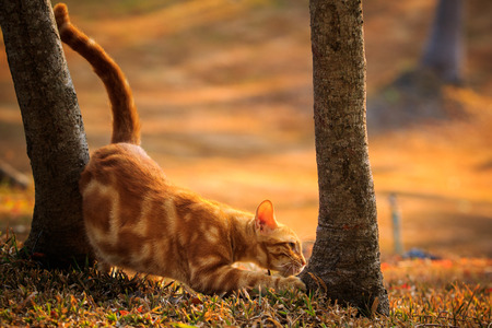 ligh: domestic orange fur cat relaxing in park with beautiful morning ligh