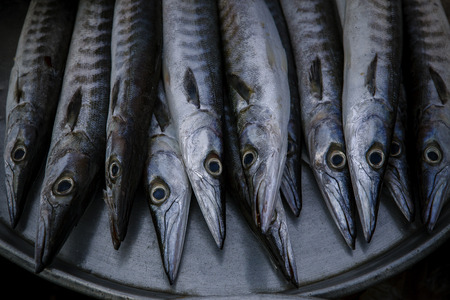 close up food: close up arrangement for sale in sea food market of  Indo-Pacific King mackerel, Spotted mackerel, Seerfish