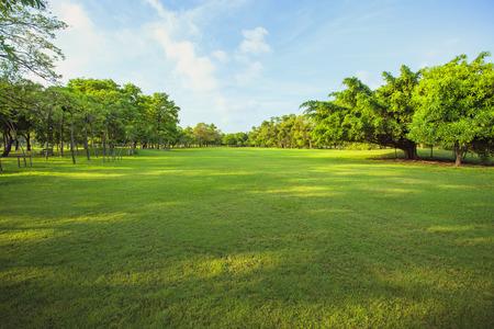 公共の公園および自然な背景として緑の芝生庭の木や植物のフィールド使用で朝の光 写真素材