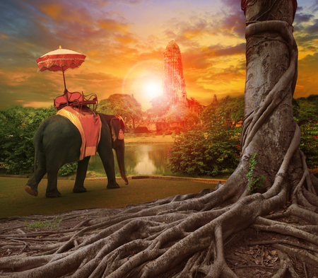 forground: thai elephant and kingdom umbrella in ancient palace pagoda ,banyan tree root forground and sun set background