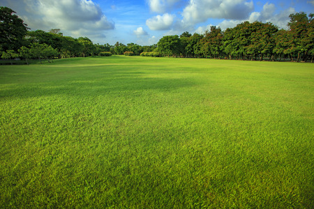 lawn grass: beautiful morning light of green grass lawn in public park use as natural background ,backdrop