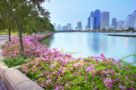 magenta papers flowers and lake in public park  and  skyscraper in heart of bangkok thailand capital