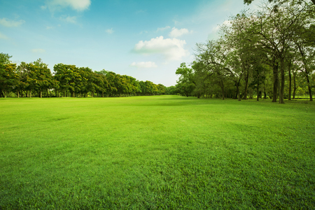 Paesaggio del campo di erba e l'ambiente verde uso parco pubblico come sfondo naturale, fondale Archivio Fotografico - 69103599