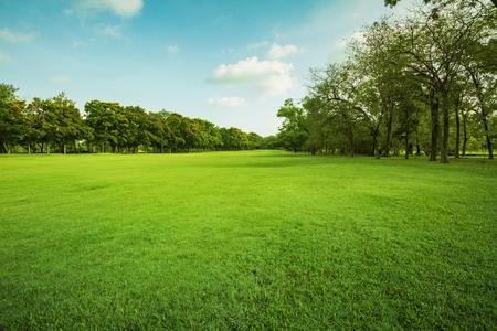 paisaje de campo de hierba verde y el medio ambiente parque público su uso como fondo natural, telón de fondo Foto de archivo