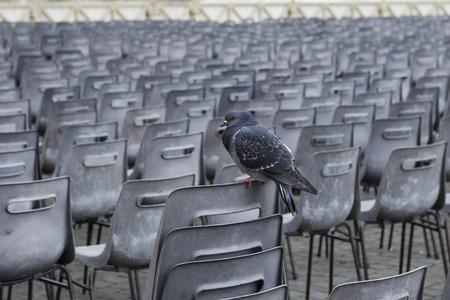 oudoor: lonely rock pigeon bird perching on disk outdoor Stock Photo