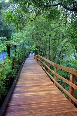 fiordland: walking path in milfordsound fiordland national park new zealand Stock Photo