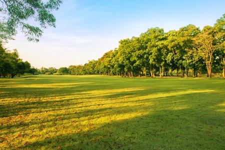 芝生のフィールドの自然の背景として緑豊かな環境の公園使用風景の背景 写真素材