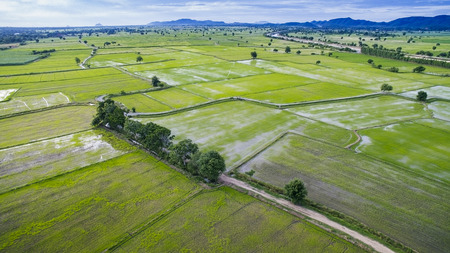 land plant: aerial view of rice paddy field in kanchanaburi thailand