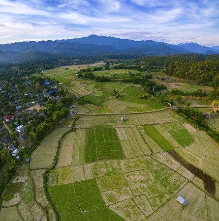 aerial view of green rice paddy field and sue tong pe bamboo bridge in maehongson most popular of culture and natural traveling destination