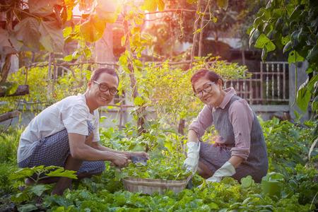Aziatische man en vrouw te ontspannen en het oogsten van biologische groente in huis tuinieren