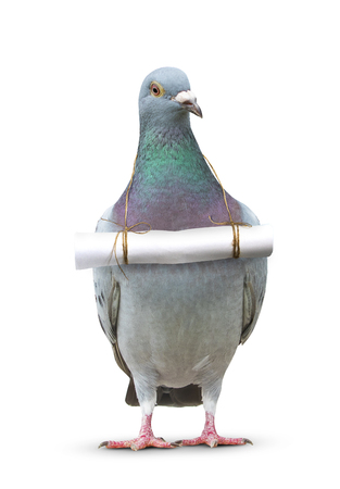 full body of pigeon bird and paper letter message hanging on breast for communication theme Standard-Bild
