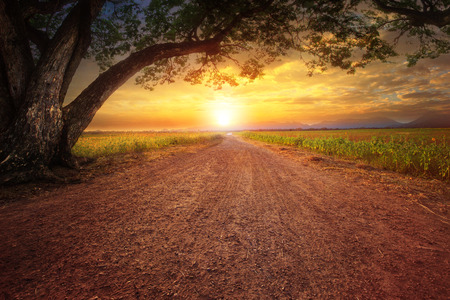 land scape of dustry road in rural scene and big rain tree plant against beautiful sunset sky use for natural background Stock Photo