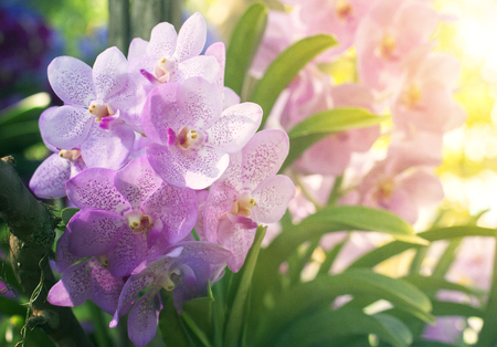 beautiful tropical orchid flower blooming in garden