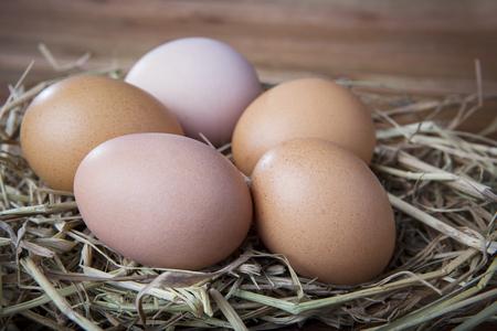 Natuurlijke organische eieren op kippen broeden nest