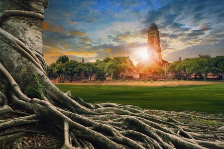 タイ観光の重要な地の歴史アユタヤ神殿中央の古代の古い塔のバンヤン ツリー土地景観の大きなルート 写真素材