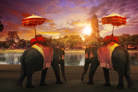 elephant dressing with thai kingdom tradition accessories standing in front of old pagoda in Ayuthaya world heritage site use for tourism and multipurpose background , backdrop  스톡 콘텐츠