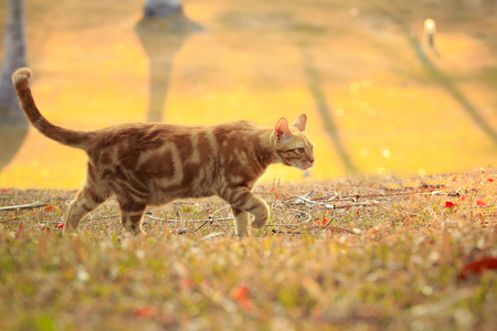 orange color fur cat walking in park with morning light Imagens