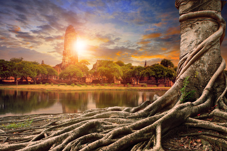 big root of banyan tree land scape of ancient and old  pagoda in history temple of Ayuthaya  central of thailand important destination of tourist