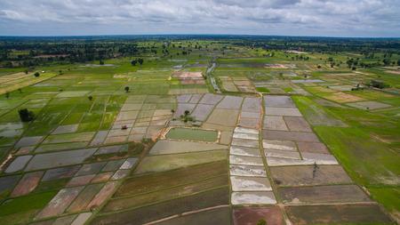 マハーサーラカーム北タイ東部の棚田農業分野の空撮