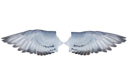원숭이 비둘기 새 격리 된 흰색 배경의 두 날개 깃털 스톡 콘텐츠