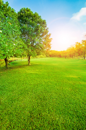 beautiful morning light in public park with green grass field vertical form Stock Photo